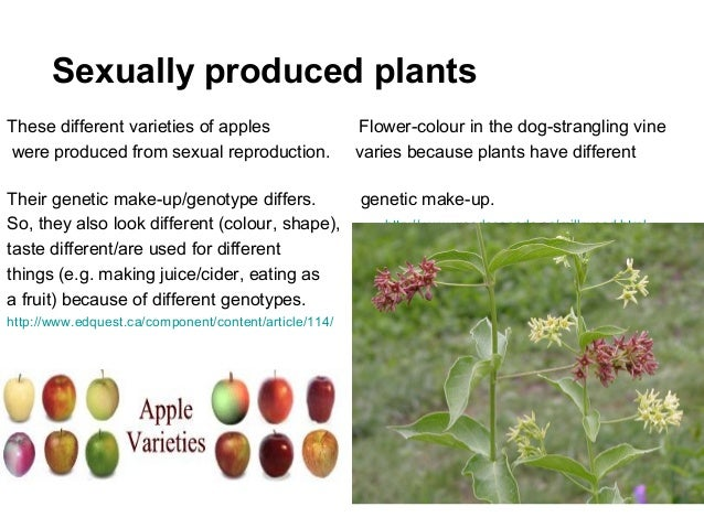 Plants reproduce sexually
