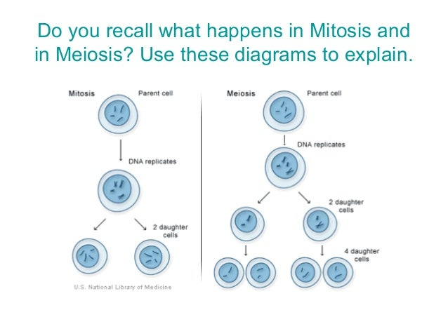 Short definition of mitosis asexual reproduction
