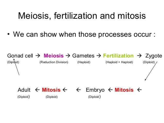 Asexual meiosis or mitosis