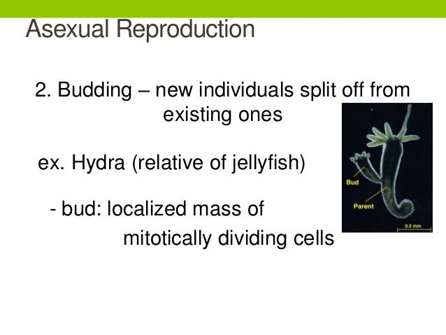 Like begets like asexual reproduction regeneration