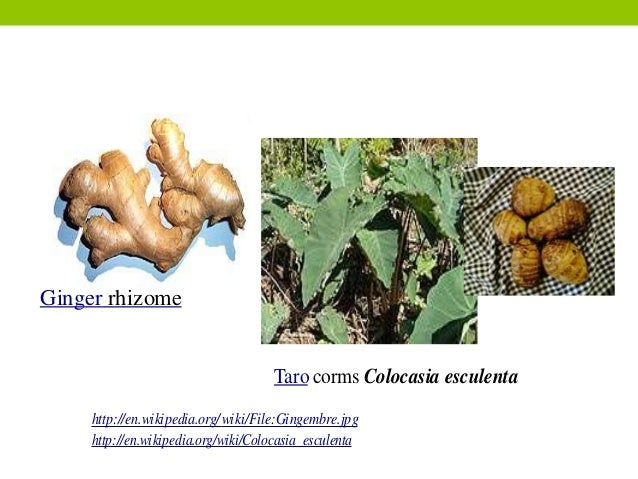 Asexual reproduction in plants rhizomes wikipedia
