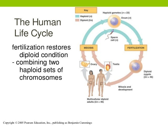 Asexual reproduction in human being
