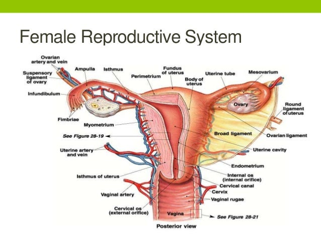 Asexual reproduction relates to human in that