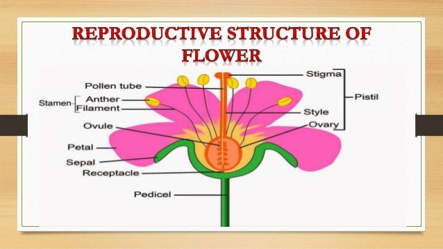 Asexual reproduction in plants flowers