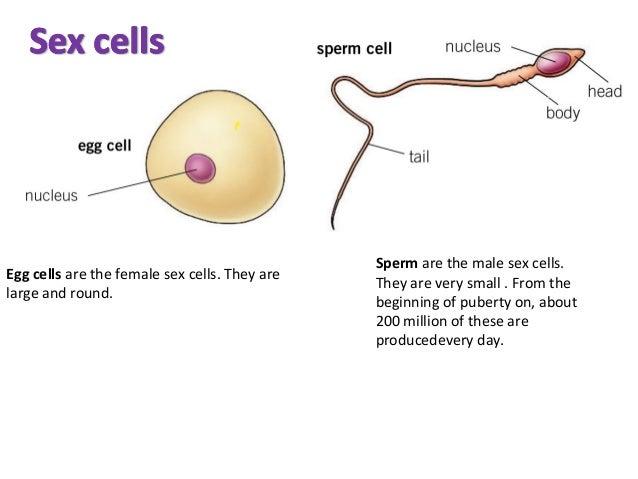 Sex on cells