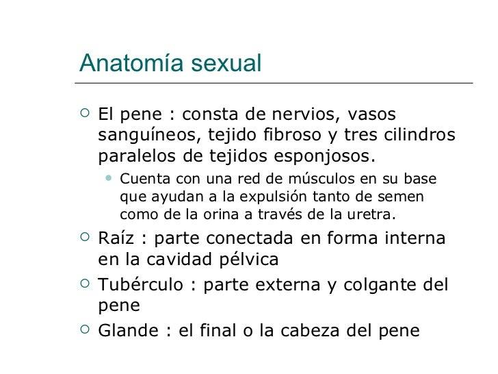 Sexualidad Humana #5 Cap. 5 Anatomia Y Fisiologia Sexual Masculina.