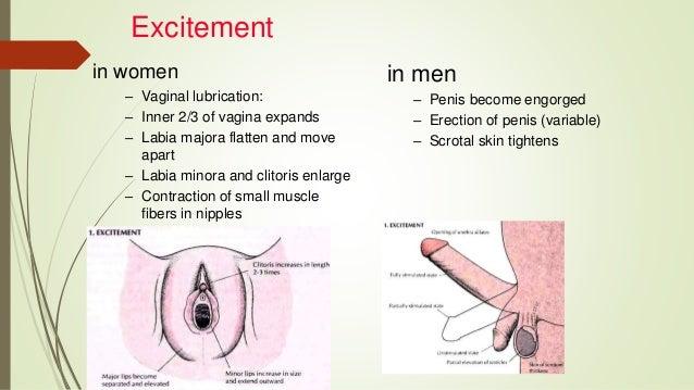 Engorgment of clitoris