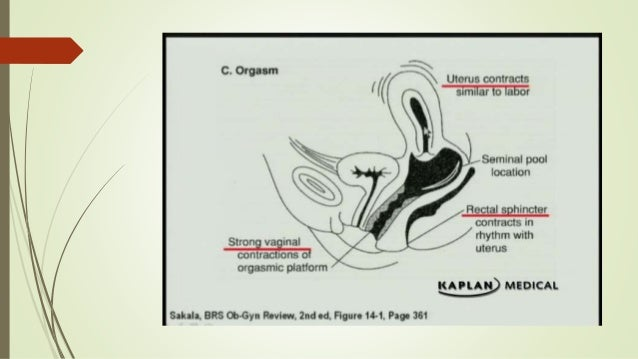 Human intercourse physiology sexual