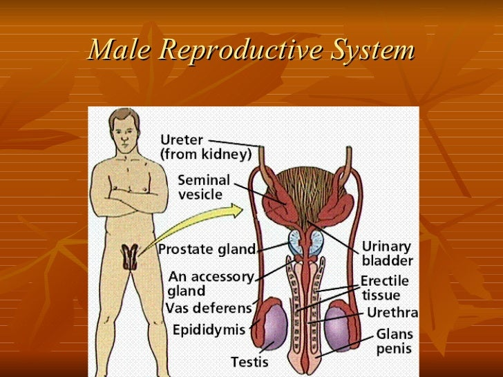 Education about sexuality and reproduction
