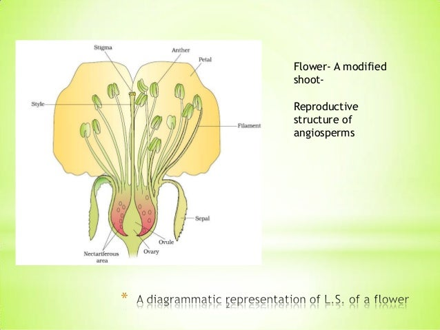 female sex organ of a flower in Redcliffe