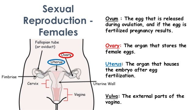 Sexual reproduction photos of humans