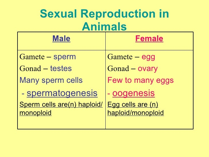 Sexual Reproduction in Animals Gamete  –  egg Gonad  –  ovary Few to many eggs -  oogenesis Egg cells are (n) haploid/mono...