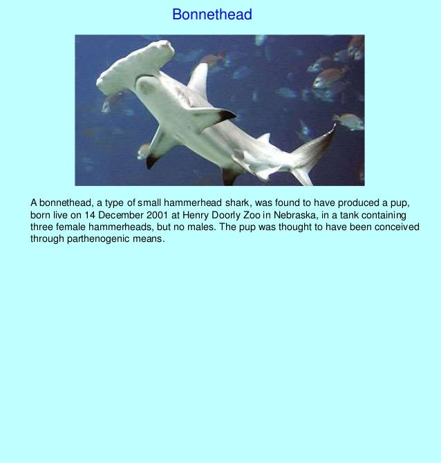 Asexual reproduction hammerhead sharks