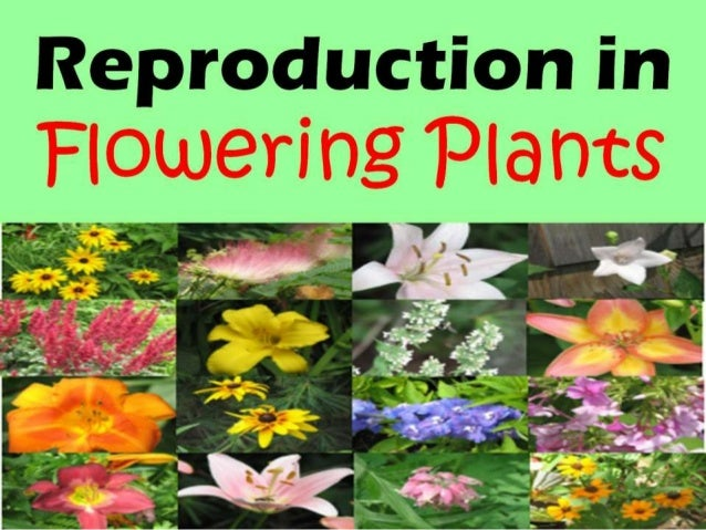 Sexual reproduction in flowering plants photos