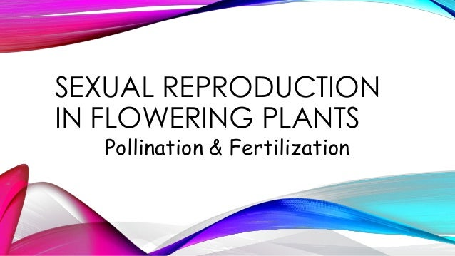 SEXUAL REPRODUCTION IN FLOWERING PLANTS Pollination & Fertilization
