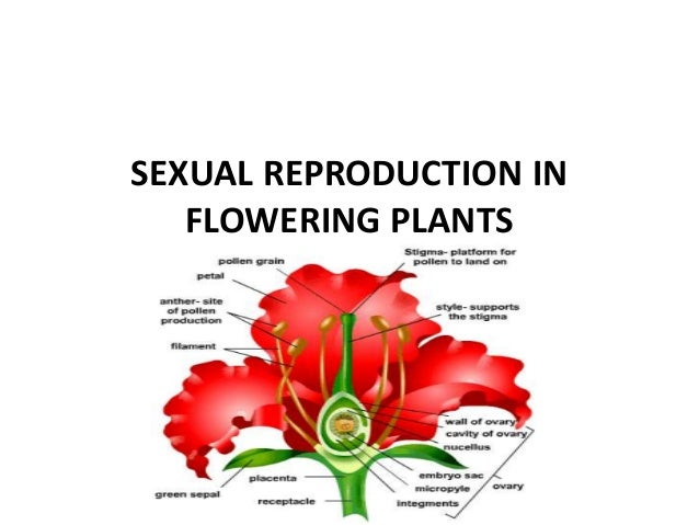 Sexual reproduction in flowering plants definition