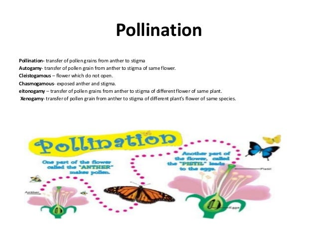 Sexual reproduction in flowering plants pollination