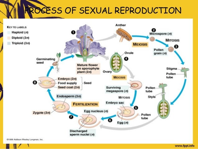 What happens during sexual reproduction in flowering plants