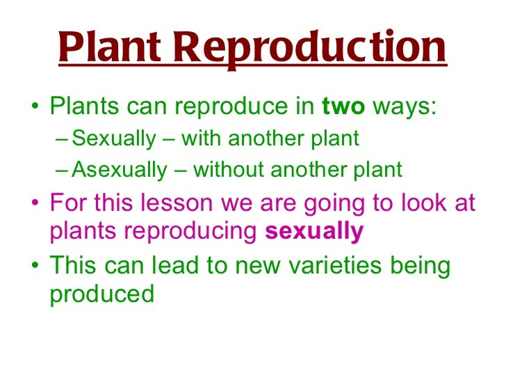 Asexual and sexual reproduction in plants ks2 science