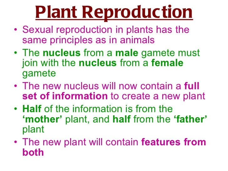 Sexual reproduction in plants igcse english