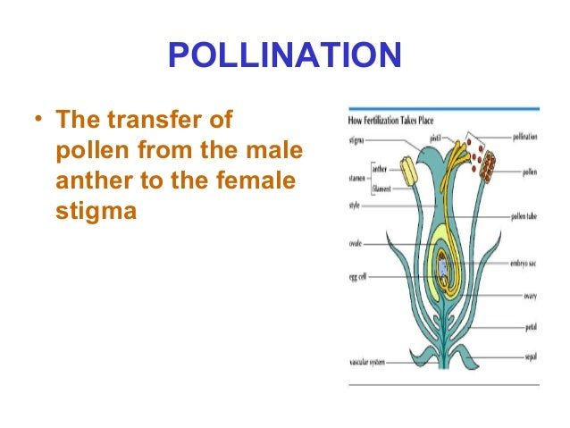 Sexual reproduction in plants igcse past