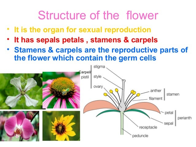 Unisexual and bisexual flower