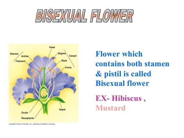 Unisexual bisexual plants