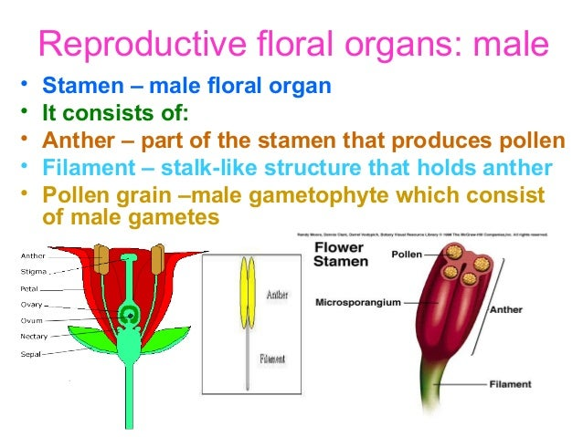 Sexual reproduction in plants occurs through