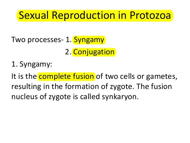Methods of asexual reproduction in protozoa