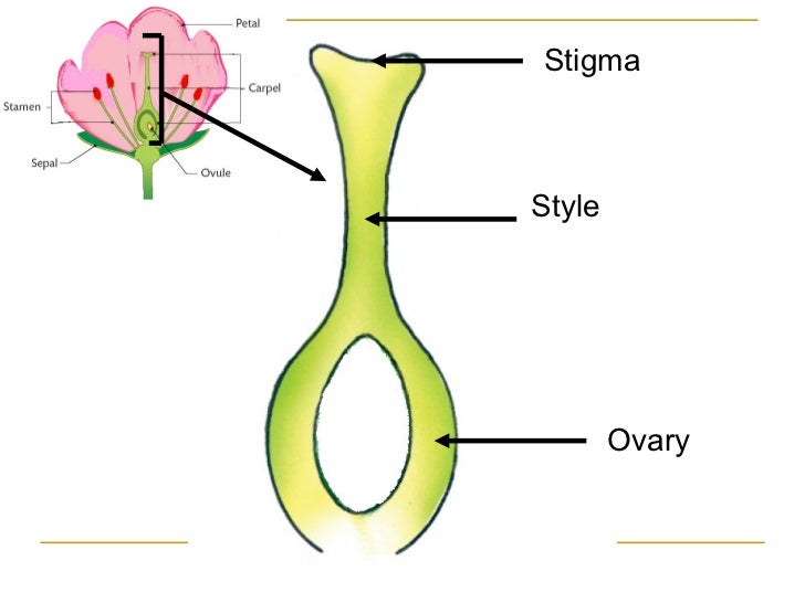 A sexual reproduction definition