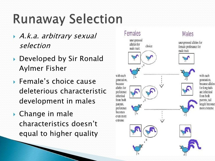 What is sexual selection in biology
