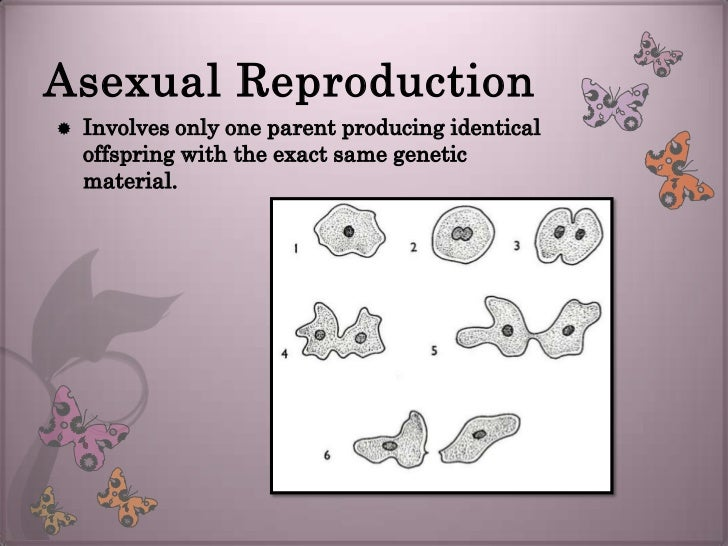 What does the term asexual reproduction mean