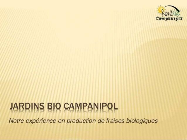 JARDINS BIO CAMPANIPOL Notre expérience en production de fraises biologiques