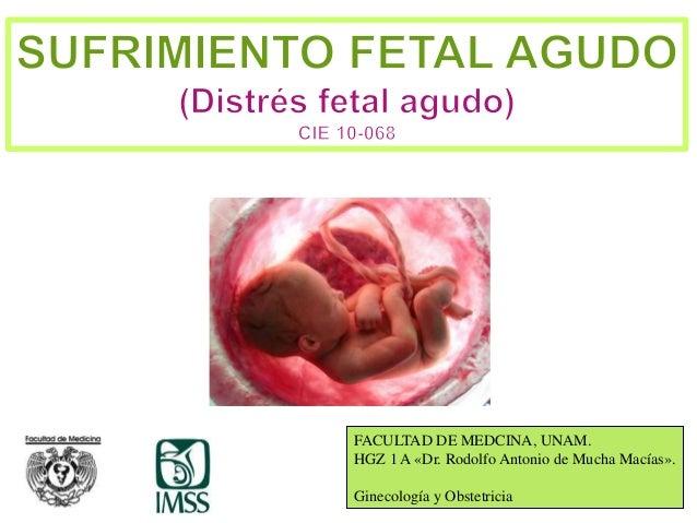1 FACULTAD DE MEDCINA, UNAM. HGZ 1 A «Dr. Rodolfo Antonio de Mucha Macías». Ginecología y Obstetricia