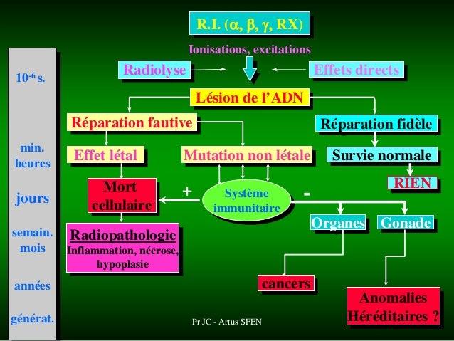 effets biologiques des rayonnements ionisants pdf