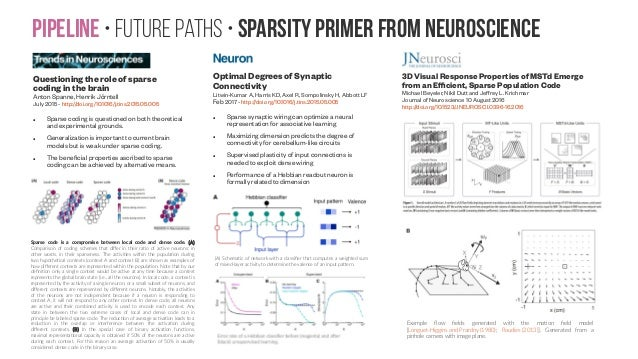 Pipeline • Future paths • sparsity primer from neuroscience Questioning the role of sparse coding in the brain Anton Spann...