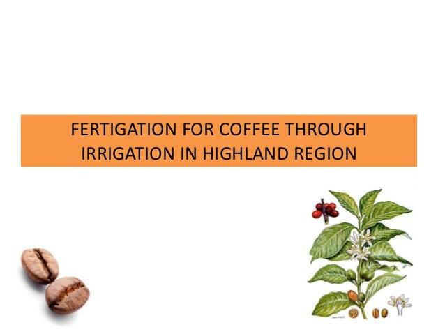 FERTIGATION FOR COFFEE THROUGH IRRIGATION IN HIGHLAND REGION