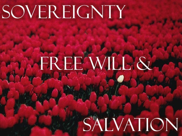 Sovereignty   Free Will &       Salvation