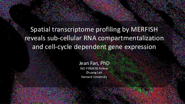 Spatial transcriptome profiling by MERFISH reveals sub-cellular RNA compartmentalization and cell-cycle dependent gene exp...