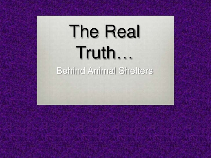 The Real Truth…<br />Behind Animal Shelters<br />