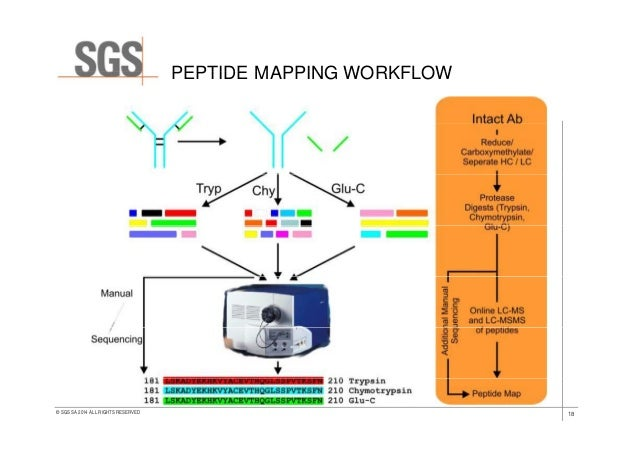 peptide mapping protocol with Sgs Lssanalytical Clinical Development Of Biosimilar Mabsa4en14 on 335150 Subunit Analysis Leads To Simultaneous Characterization Of Multiple Attributes Of Monoclonal Antibodies in addition Sgs Lssanalytical Clinical Development Of Biosimilar Mabsa4en14 as well 978 1 4939 3037 1 19 additionally parative Analysis Of Functional Metagenomic Annotation And The Mappability Of Short Reads By Rogan Carr And Elhanan Borenstein together with Peptide Mapping OfV9Qj9RBjKlHHdR2Eto5MYmQl7e3CVrKgAnPT5MWDE.
