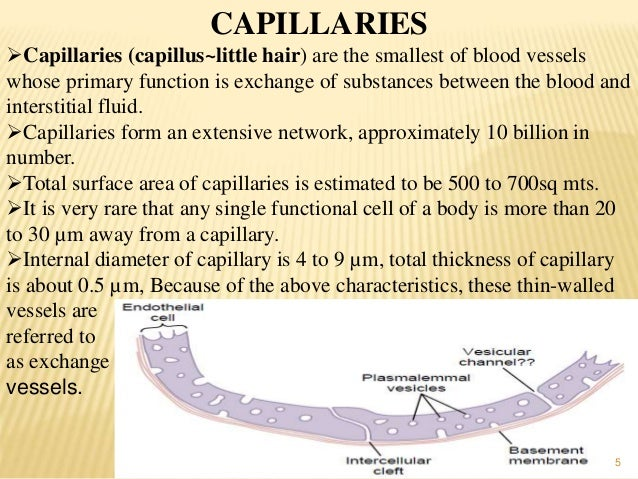 functions of capillaries and its permiability-ayurveda-panchakarma