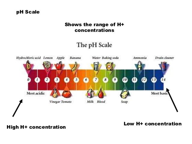 Ph Scale Facts For Kids