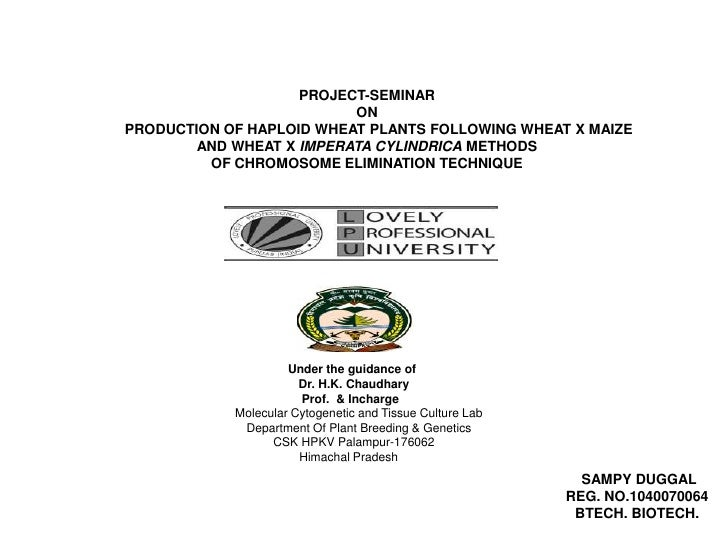 PROJECT-SEMINAR                          ONPRODUCTION OF HAPLOID WHEAT PLANTS FOLLOWING WHEAT X MAIZE        AND WHEAT X I...