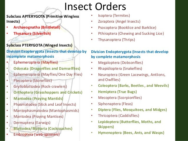 sharing divisi insect orders 3