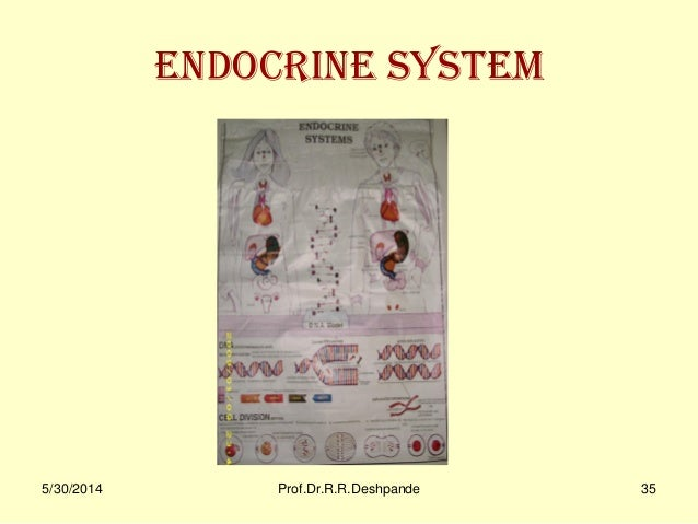 Sharir Kriya Charts Models Ppt By Profdrrrdeshpandepuneindia besides Mother Runners Racing Training Periods as well Hello Kidney as well Submitted 10 Puns To Best Pun Contest furthermore Sharir Kriya Charts Models Ppt By Profdrrrdeshpandepuneindia. on excretory system pun