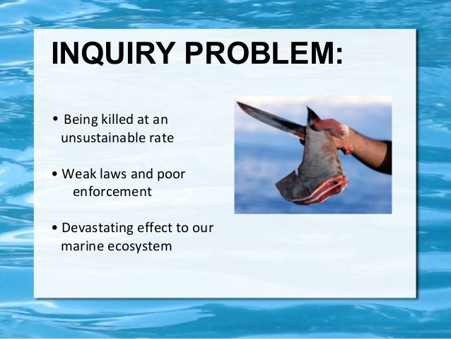 the shark finning problem Shark fin soup is a long-standing tradition in china, therefore there is a high  demand over the  educate the public about the shark finning problem to help .