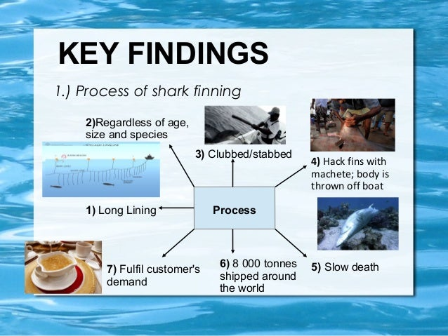 the shark finning problem Since 2000, shark finning — a practice that involves capturing sharks, cutting off their fins, and then throwing them back into the ocean to die — has technically been banned in the united.