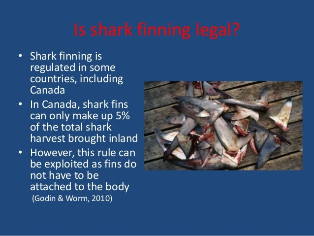 shark fin soup essay Shark fin soup is a status symbol in asian culture and a sign of wealth (it can sell for up to $80 a serving in restaurants) still allows shark finning.
