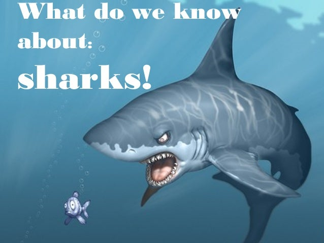 What do we know about: sharks!